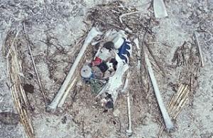 Toter Albatros mit Plastik im Magen